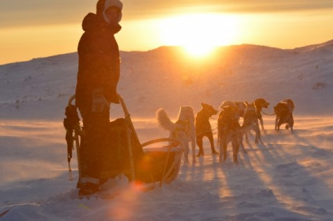 Finnmark dogsled race cancelled over COVID-19 fears